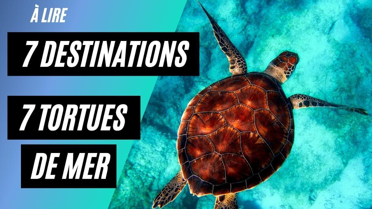 7 Destinations où voir des tortues marines ?